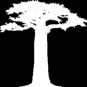 baobabBLANC